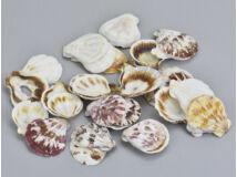 """""""Shell"""" kagyló 3-4cm 10dkg/csomag"""