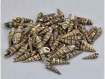 Hegyes csíkos csiga 3-4cm 10dkg/csomag