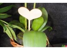 Natúr fa - Beszúrható szív 17,5cm 5db/csomag